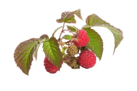 aromatizacion de frutos rojos