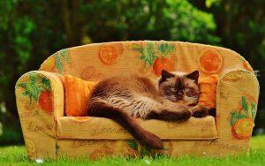 ¿Cómo eliminar los malos olores del sofá?